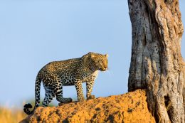 The Beauty and Excitement of Safari Holidays in Africa