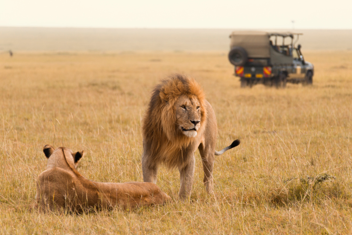 Time to Realise your dream of visiting South Africa