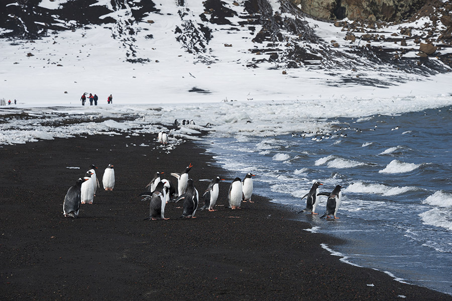 Antartica-Cruise-Packages-Fine-Travel