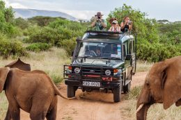 8 Reasons Why you Should Experience a Safari Holiday