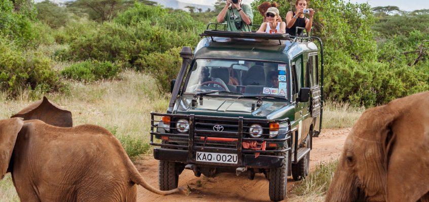 8 Reasons Why you Should Experience a Safari Holiday
